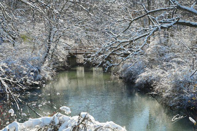 Winter Scenes 2020 02