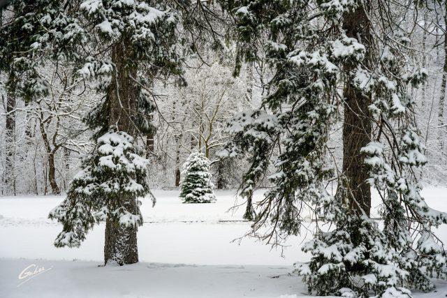 Winter Scenes 2020 51