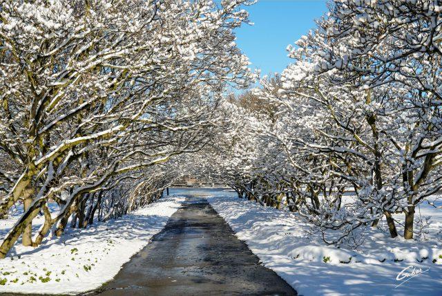 Winter Scenes 2020 15