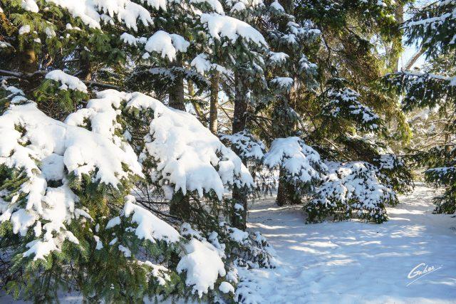 Winter Scenes 2020 22