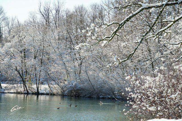 Winter Scenes 2020 29