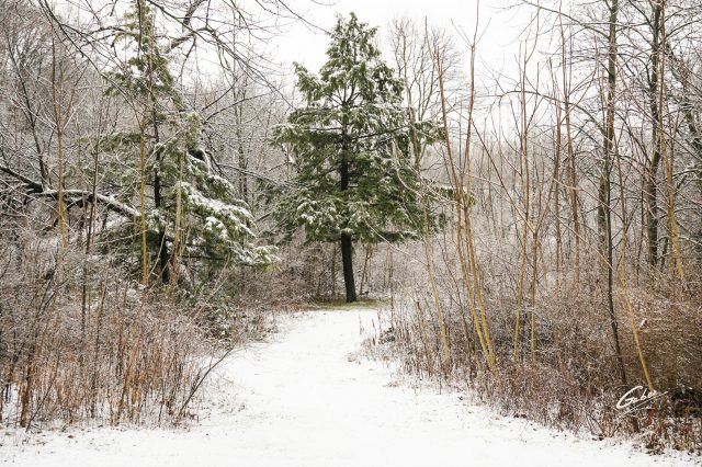 Winter Scenes 2021 01
