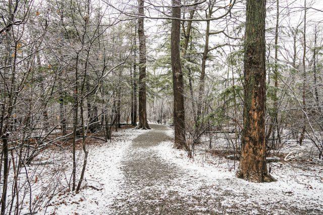 Winter Scenes 2021 04