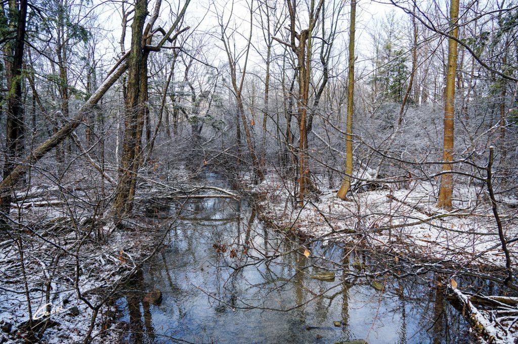 Winter Scenes 2021 15