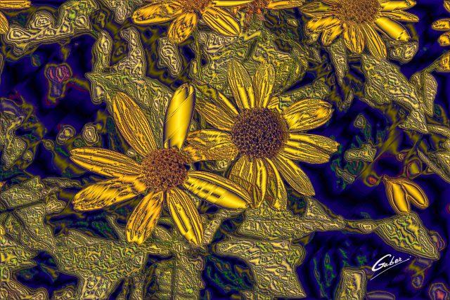 Arnica cordifolia 2017 01