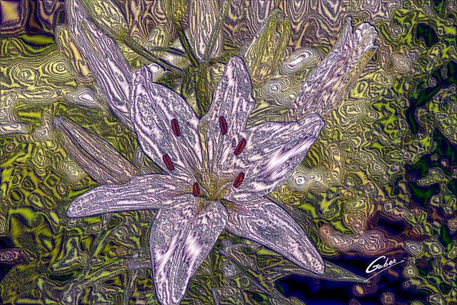 Belladona lily (Amarylis belladonna) 2018  01