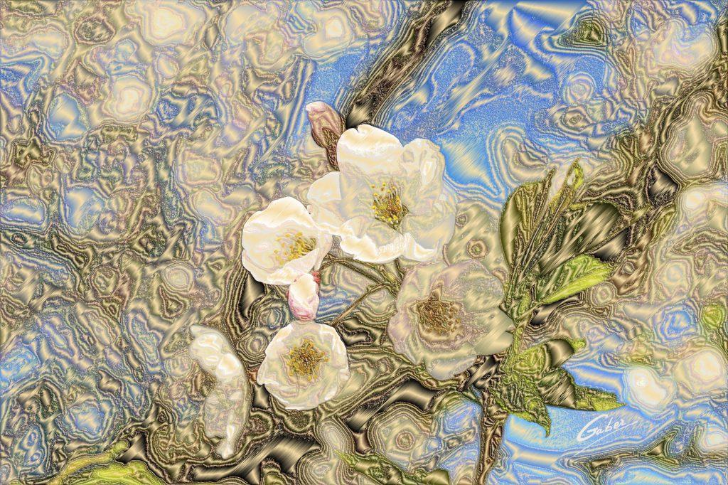Cherry Blossoms (Prunus serrulata) 2011  01