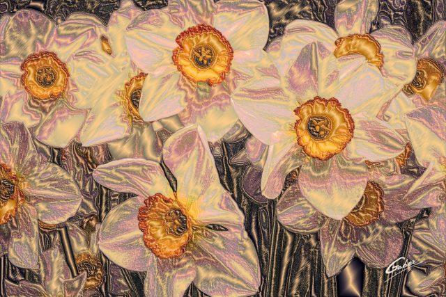 Dafodils in full bloom 2013  02