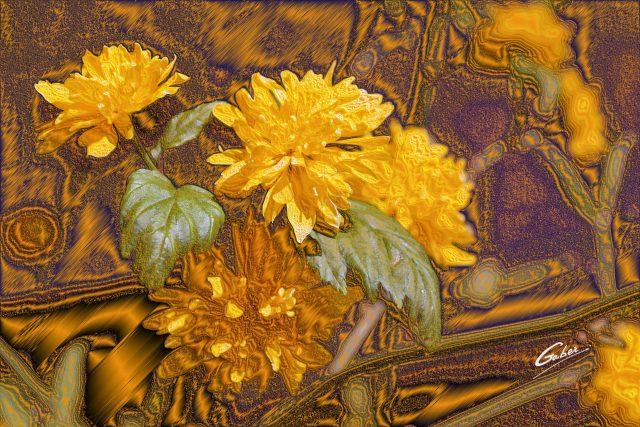 Kerria japonica 2011 01