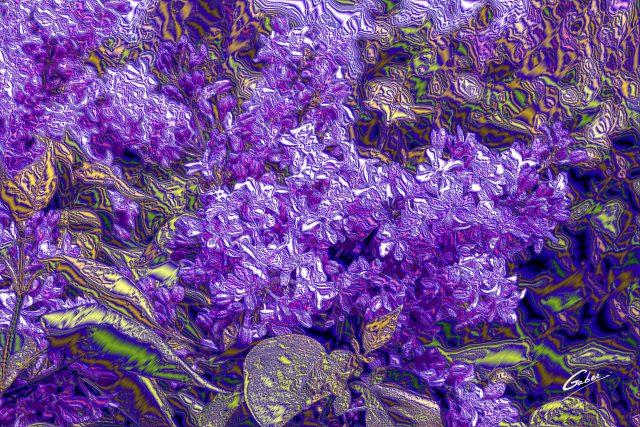 Lilacs  2018 02
