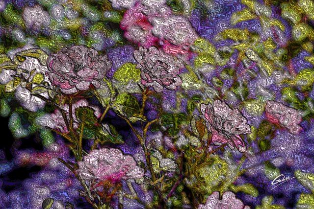 Roses Miniatures  2020  01