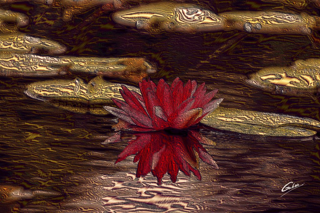 Water Lily  2018  01