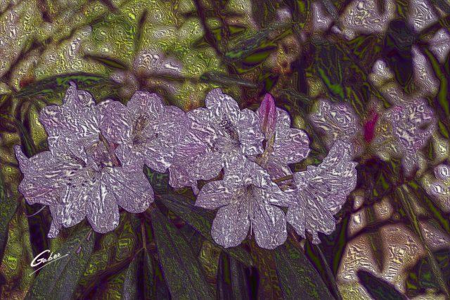 Late Spring 2021 Azelea in Bloom 01