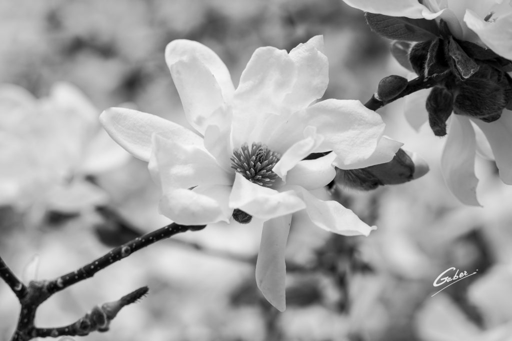 Early Spring 2021 Magnolia  01
