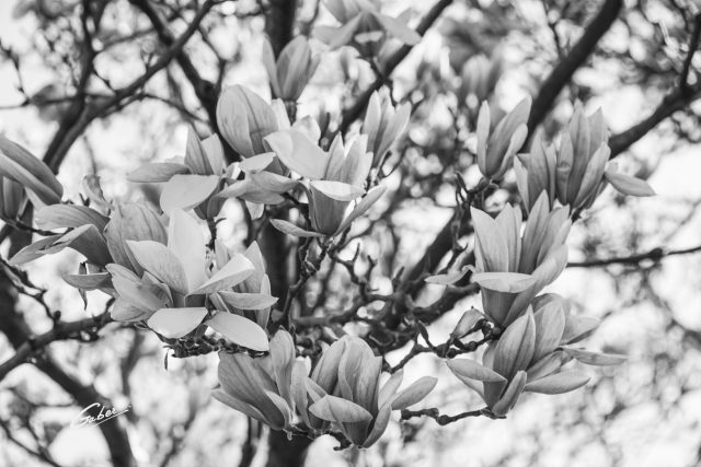 Early Spring 2021 Magnolia  13