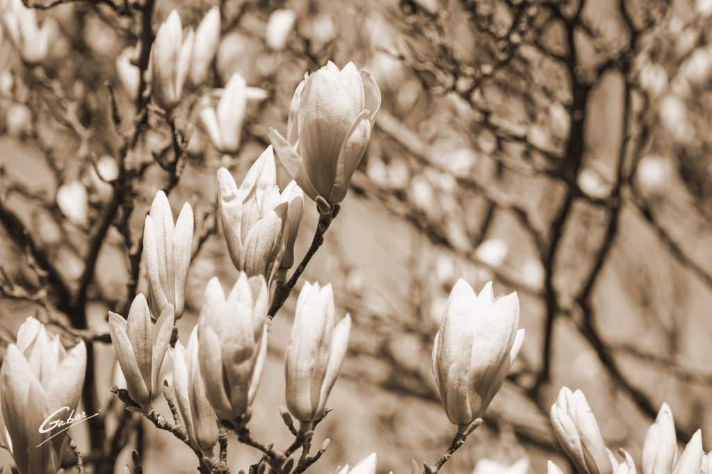 Early Spring 2021 Magnolia  18