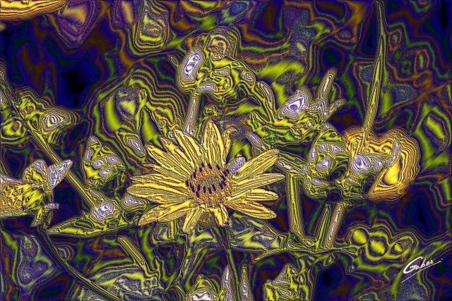 Compass Bloom (Silphium  laciniatum)  03