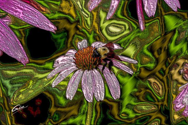 Purple Coneflower (Echinacea  simulata) 04