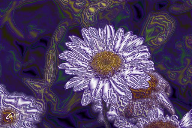 Daisy Oxeye (Leucantherum vulgare) 02