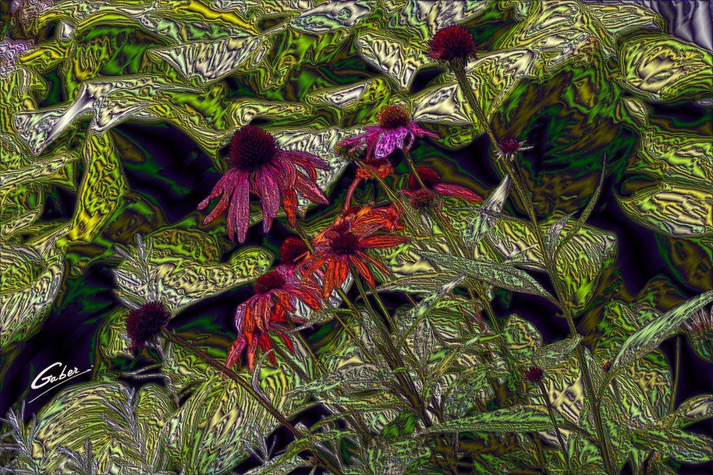 Echinacea  Sanguina 02