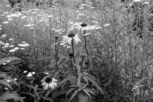 Summer Flowers Garden  02