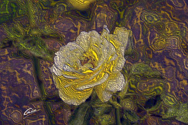 Roses  03