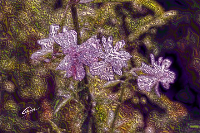Wild Geranium (Geranium maculatum) 01