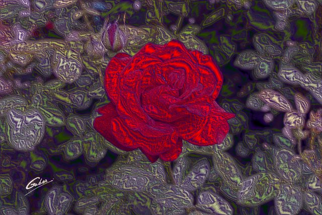Roses  05