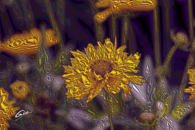 Tickseed  (Coreopsis  grandiflora)  03