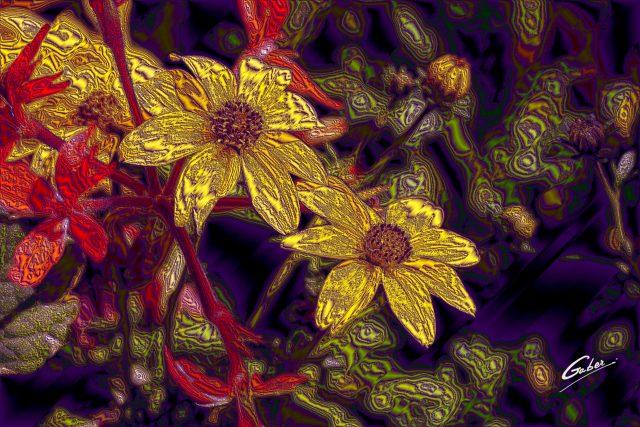 Woodland Sunflower (Helianthus  strumosus)  02