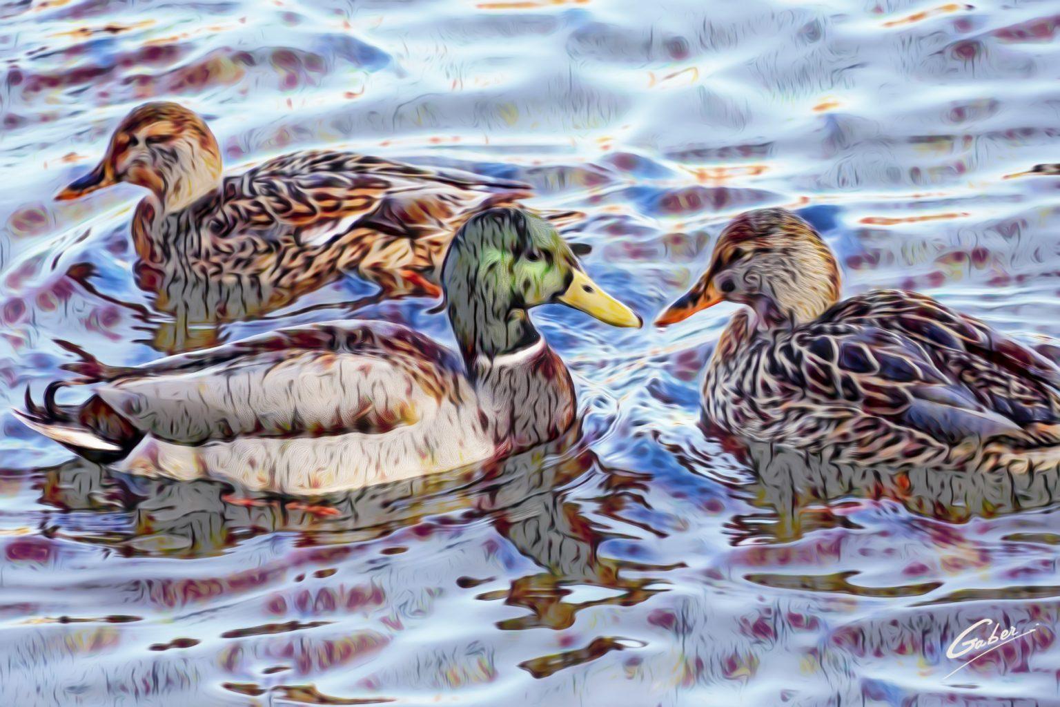 Ducks_2020_11_16x24_FINAL_GAB-FLW21-BESAS-50