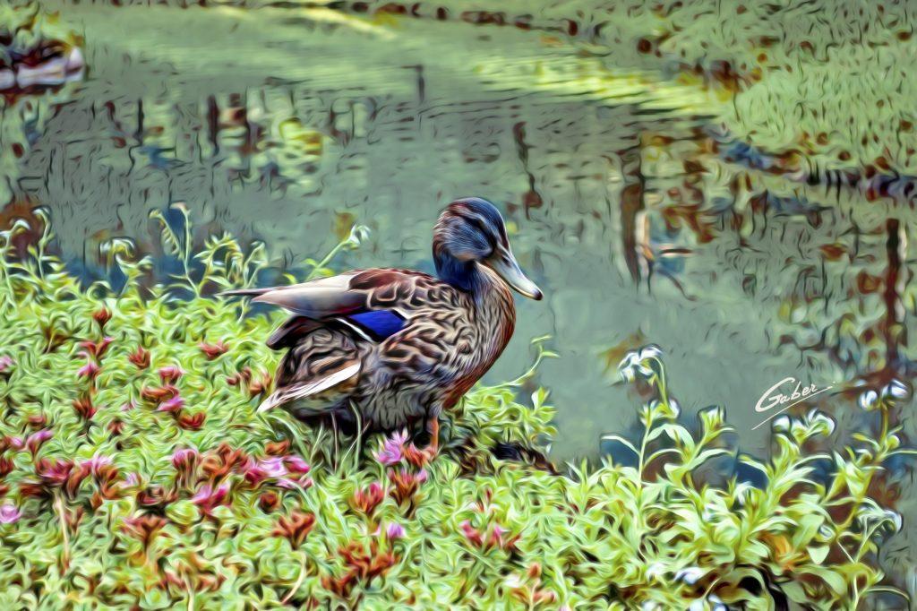 Ducks 07