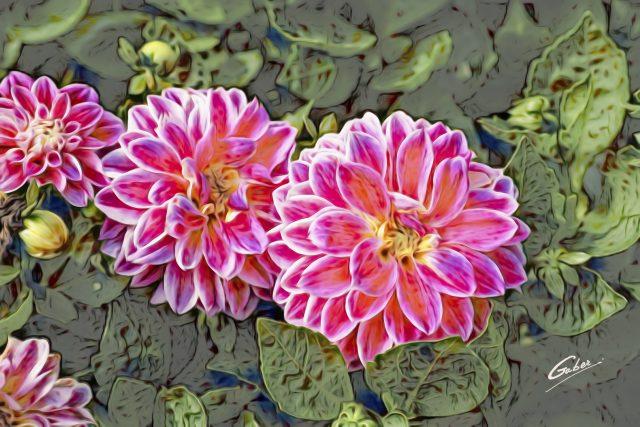 Begonia cordelia 07
