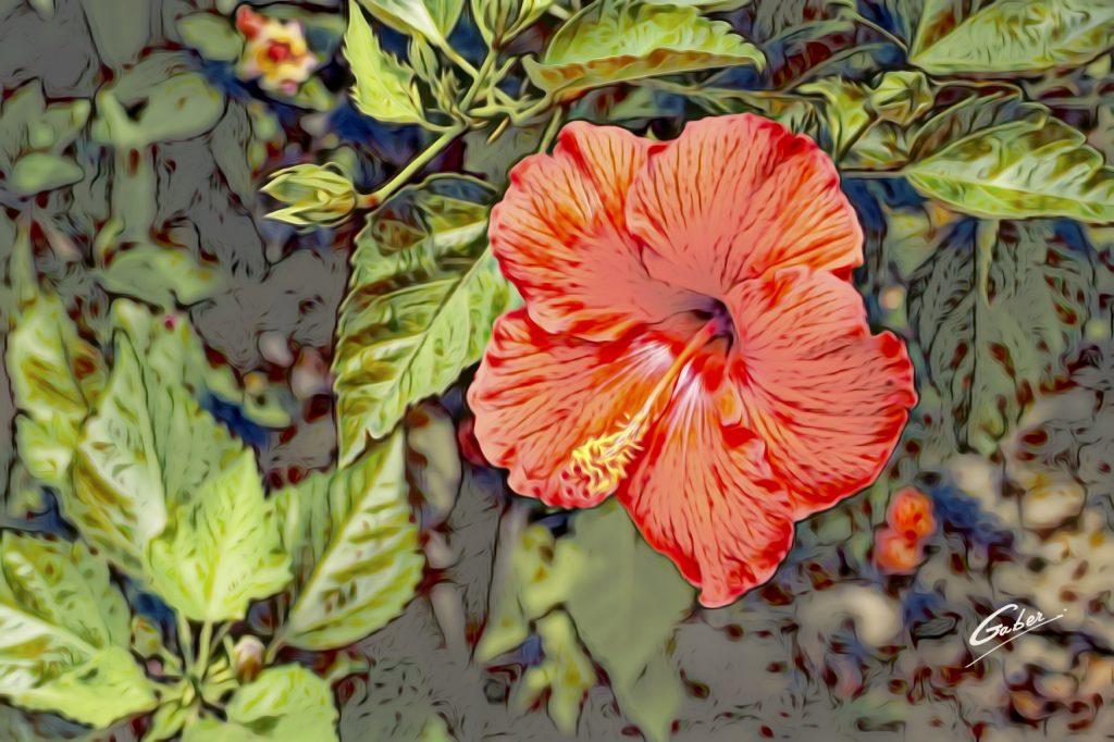 Hibiscus rosa-sinensis 01