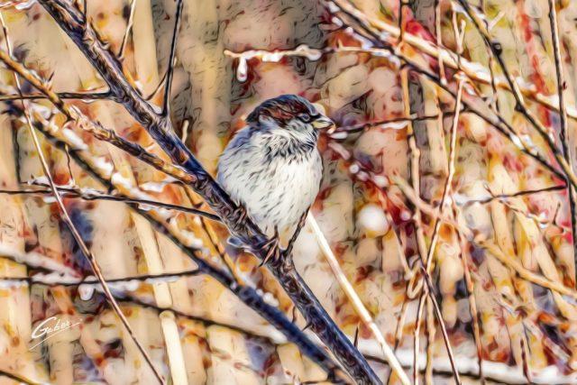 Sparrow  09