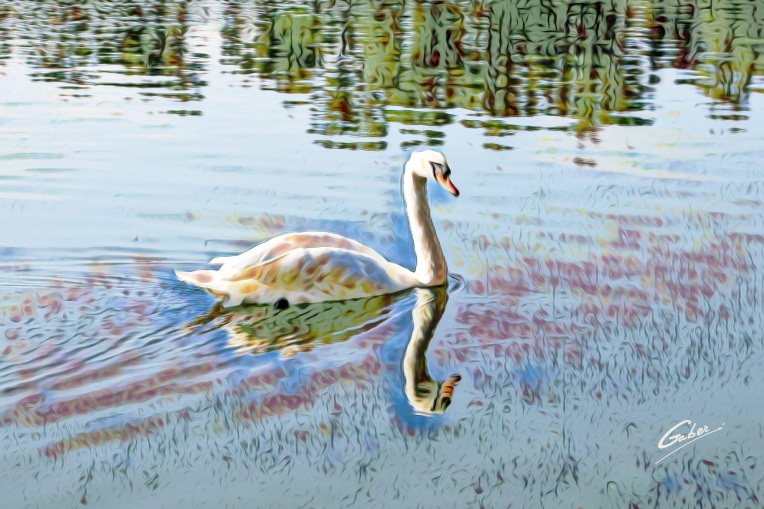Swan_41_16x24_FINAL_GAB-FLW21-BESAS-80