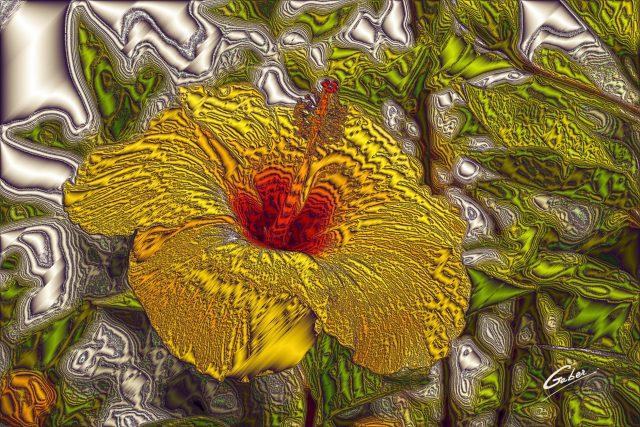 Hibiscus rosa sinensis  03