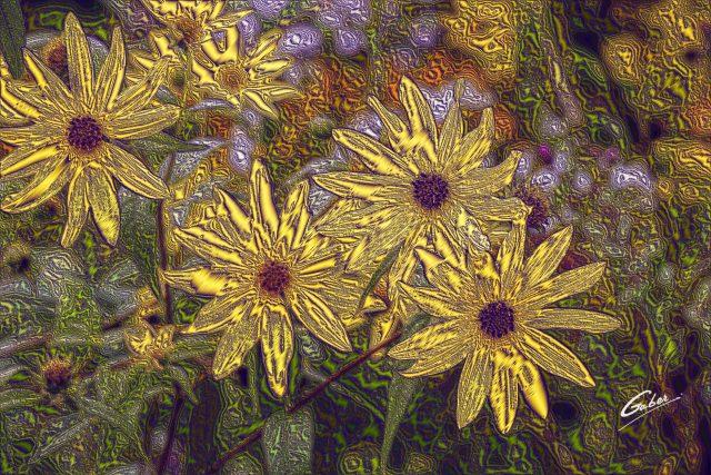 Sunflower woodland (Helianthus strumosus) 01